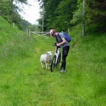 Brian gets attacked by a sheep