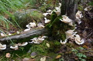 Well, if we get lost, there are some tasty mushrooms to snack on.