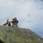 Dumb sheep - they seem to prefer high boulders to lucious grass