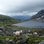 Moutain lakes and mountain sheep