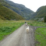 Cycle track to Flam